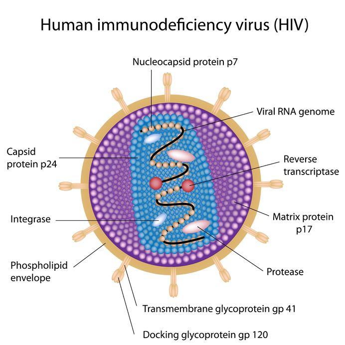 drawn image of HIV virus
